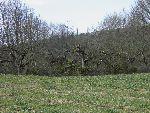 Obrezan sadovnjak v Serdici (foto: Robi Gjergjek)